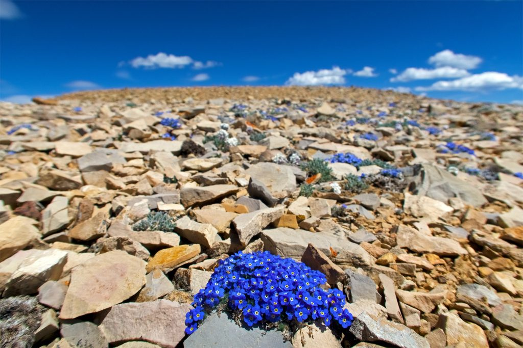 Flowers on Horseshoe Mountain